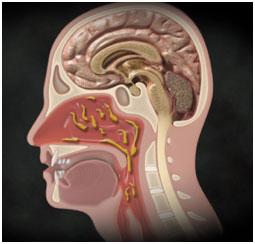 후비루로 인한 목의 자극은 기침을 유발할 수 있다.jpg